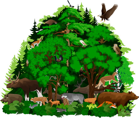 vector woodland forest animals