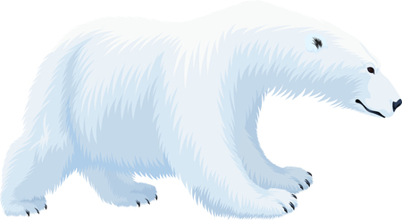 vector Polar Bear (Ursus maritimus)