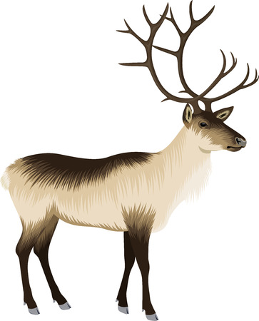 vector raindeer illustration