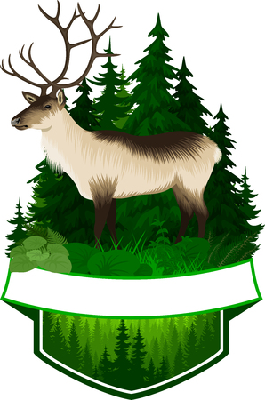 vector illustrations - Find the forest woodland animals