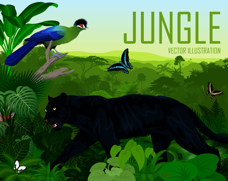 Vector Tanzania jungle rainforest with Hartlaub's turaco, black panther leopard and butterflies 向量圖像