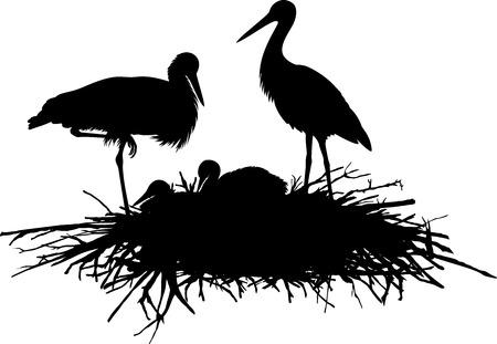 vettore, silhouette, di, cicogne, in, il, nest