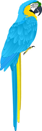 vector parrot blue-and-yellow macaw (Ara ararauna)