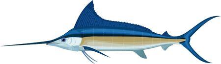 vector swordfish Atlantic blue marlin Ilustração