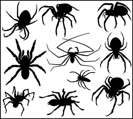 Vector Spider Silhouette Collection