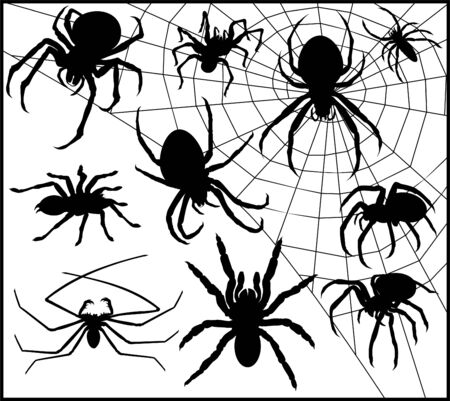 Vector set of Spider Silhouette Collection on web