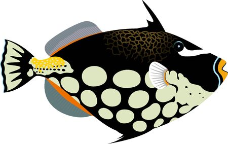 vector clown triggerfish illustration