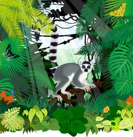 vector jungle rainforest illustration with Madagascar lemur, Madagascan sunset moth and African moon moth