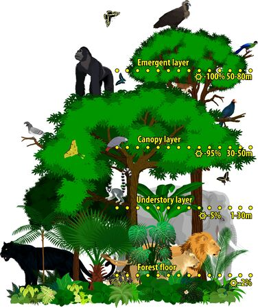 Rainforest african jungle layers vector illustration. Vector Green Tropical Forest jungle with lions, gorilla, griffon, panther, elephant and turaco