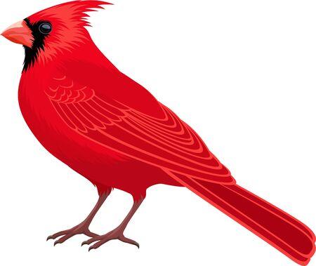Vektor Roter männlicher Nordkardinal - Staatsvogel