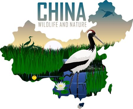 vector china map with Red-crowned crane