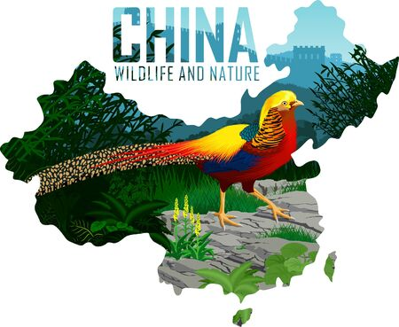 vector china map with Golden pheasant and great wall