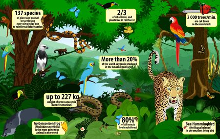 vector rainforest infographic with animals illustration. Green Tropical Forest jungle with parrots, jaguar, boa, peccary, harpy, monkey, frog, toucan, anaconda and butterflies