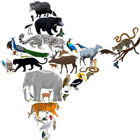 Vector India fauna map, flat elements. Animals, birds, reptiles, insects big set. Geography infographic illustration