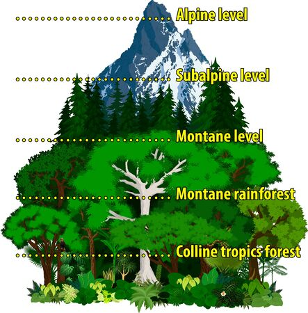 Vector Altitudinal zonation in mountains forest