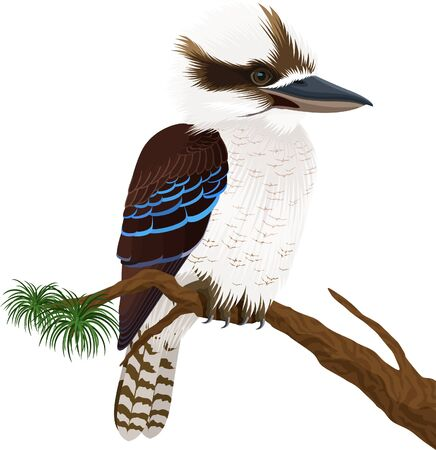 vector australian laughing kookaburra on branch Çizim