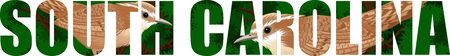 vector Carolina wren - South Carolina State Bird illustration