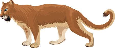 vector Puma. Cougar, mountain lion illustration Ilustrace