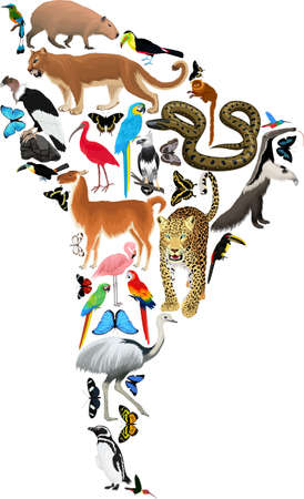 Vector South America fauna map, flat elements. Animals, birds, reptiles, insects. Geography infographic illustration. Ilustrace