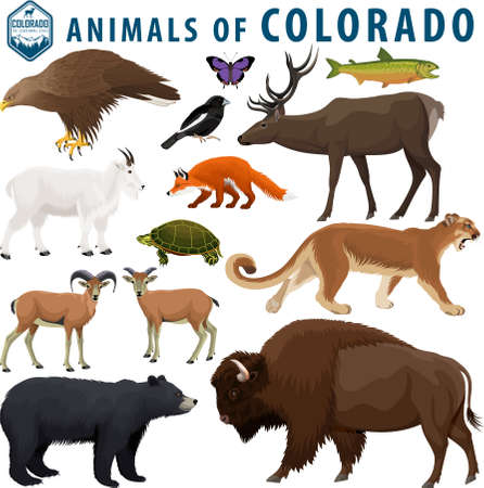 vector set - animals of Colorado: Bison, black bear, mountain goat, puma, bighorn sheep, turtle, red fox, golden eagle, elk, lark bunting, colorado hairstreak, greenback cutthroat trout.  イラスト・ベクター素材