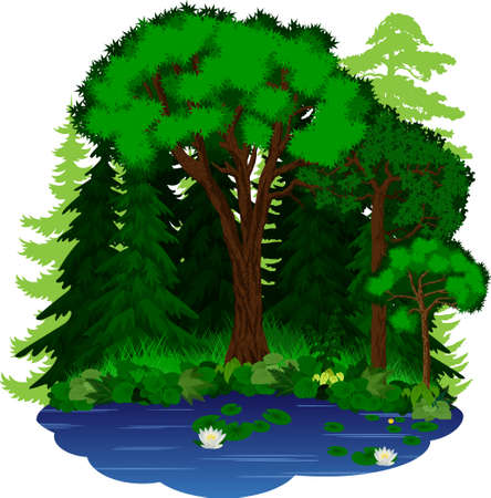vector woodland green forest trees illustration