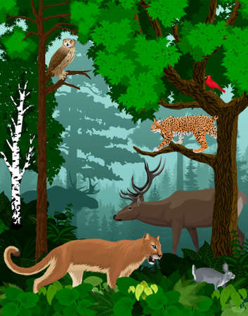 vector woodland green forest trees backlit with cougar puma, lynx, eagle owl, rabbit, red cardinal and elk