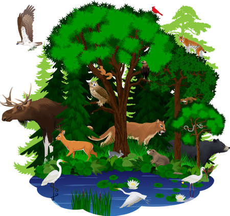vector woodland green forest with animals