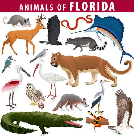 vector set - animals of Florida: barred owl, key deer, osprey, snail kite, opossum, coral snake, Everglades rat snake, Puma Cougar, racoon, gray fox, spoonbill, Mockingbird, ibis, heron and sailfish