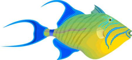 vector fish queen triggerfish illustraton Ilustração