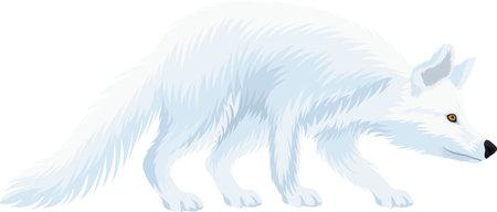 vector White arctic fox illustrations 向量圖像