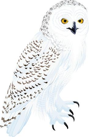 vector arctic snowy owl illustration Stock Illustratie