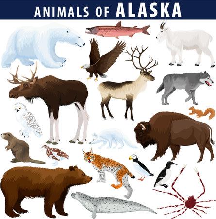 vector set - animals of Alaska: polar bear, bald eagle, moose, lynx, beaver, crab, fox, owl, seal, bison, bear, mountain goat, reindeer, wolf 向量圖像