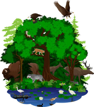 vector woodland green forest and lake with animals: bison, bald eagle, deer, wolf, owl, lynx, racoon, turtle, spoonbill, Curlew and Ibis