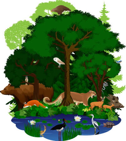 vector woodland green forest and lake with animals: eagle, snake, fox, wild hog, grizzly bear, cougar puma, deers, barn owl, turtle, black stork, heron and bittern