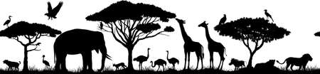 Vector horizontal seamless tropical african savannah with lions, elephant, girrafe, vulture, heron, hyena, common warthog, common warthog, gray parrot, African ostrich and crowned crane 版權商用圖片 - 165405356