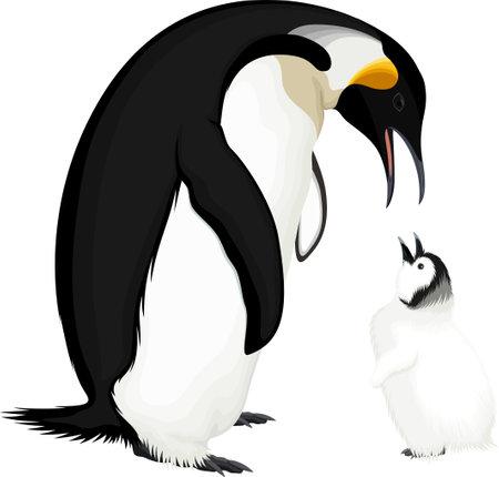 vector wild Emperor penguin with kid