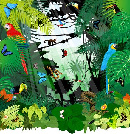 Vector brazil rainforest jungle illustration with parrot macaw ara, toucan, anaconda, hummingbirds and butterflies Vektorové ilustrace