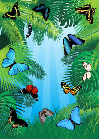 vector tropical background with butterflies of south America