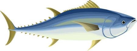 vecor Pacific bluefin tuna illustration
