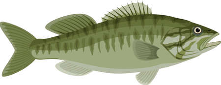 vector Guadalupe Bass fish illustration