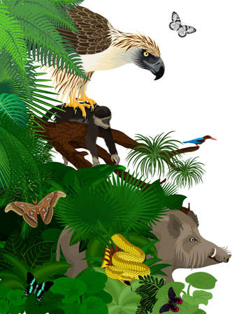 Vector jungle rainforest foliage vertical border illustration with Philippines jungle forest with white-throated kingfisher, giant atlas moth, bearded pig and philippine eagle with monkey 向量圖像