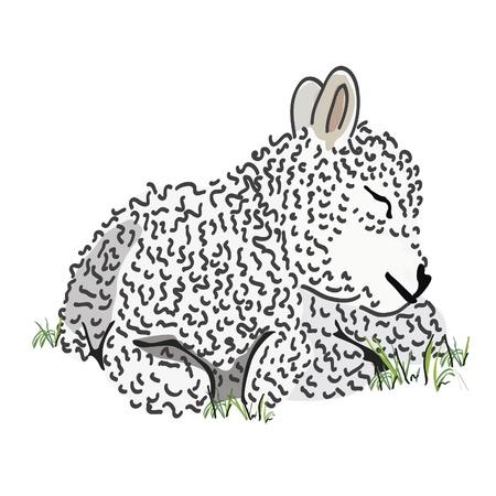 ovejita bebe: Dibujado a mano cordero lechal