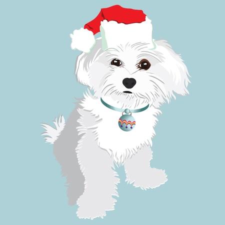 maltese dog: Cute christmas puppy