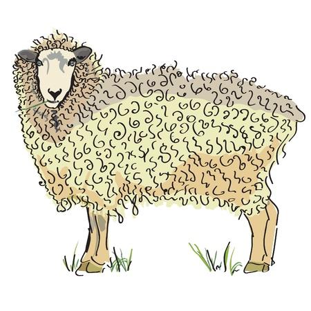 Mouton australien