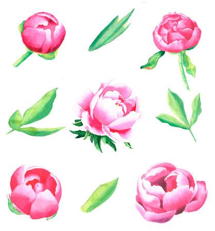 Watercolor set of peonies drawn illustration 写真素材