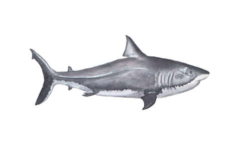 Watercolor shark. Hand drawn illustration on the white background Stock Photo