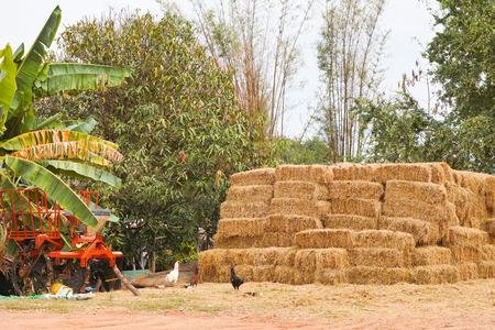 hay bales: Pile of hay bales beside harvesting machine