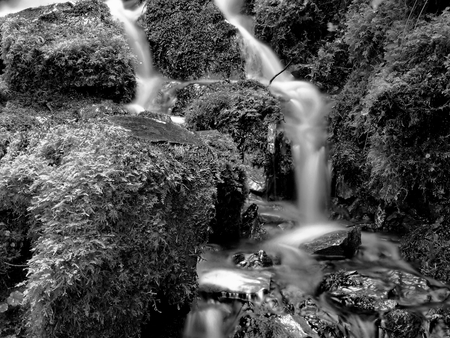 proxy falls: Smooth flowing Proxy Falls on the Old Mckenzie Highway in Western Oregons Cascade Mountains running through moss covered rocks on a fall day.