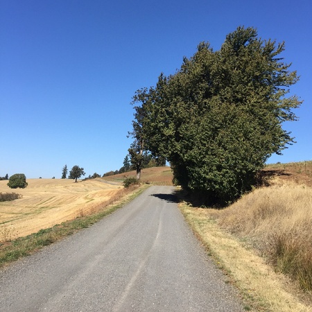 The old road leading to the historic Union Hills Cemetery in Western Oregon runs through farmland with a beautiful green tree on a sunny fall day.