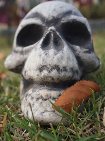 A scary looking Halloween decoration of a skull with a dead leaf blown against it sitting in the grass on a fall day.